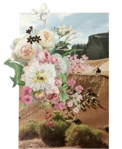 landscape desert flowers