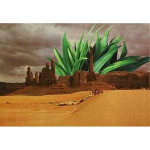 landscape image-4