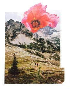 landscape poppy pilgrimage